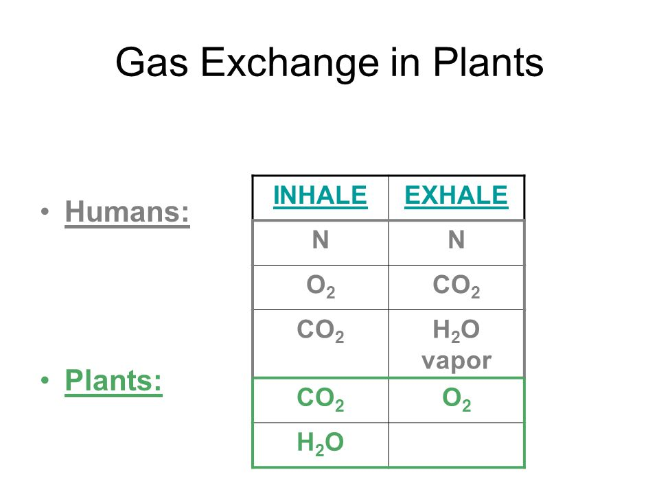 Gas Exchange in Plants Humans: Plants: INHALE EXHALE N O2 CO2