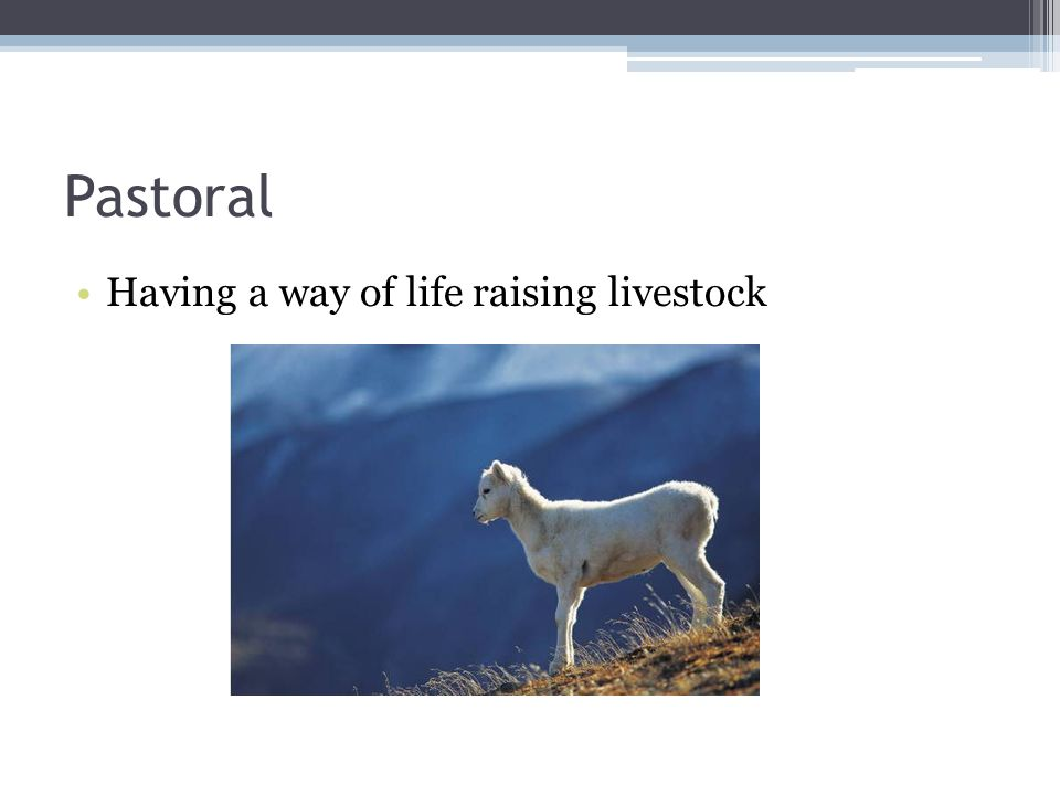 Pastoral Having a way of life raising livestock