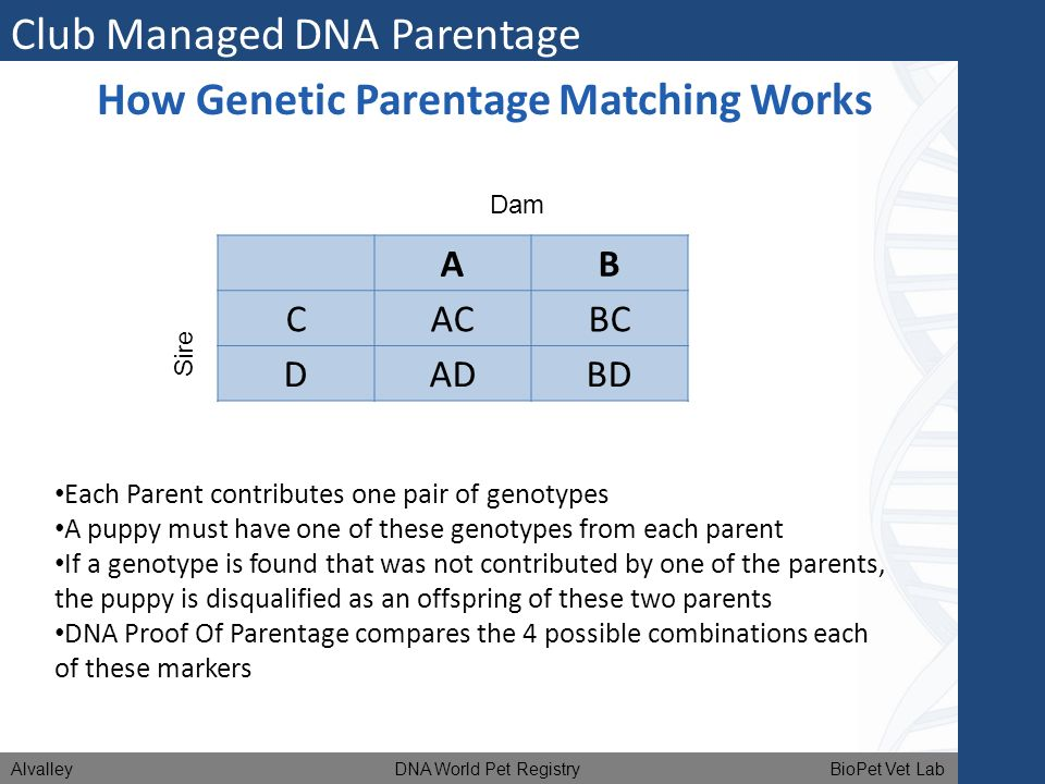 How Genetic Parentage Matching Works