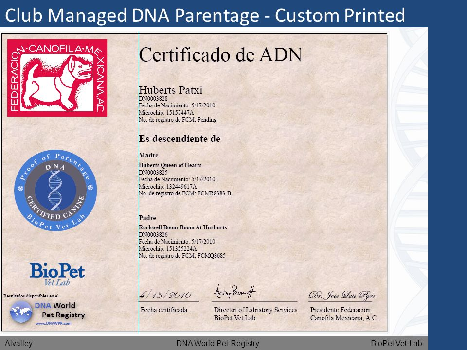 Club Managed DNA Parentage - Custom Printed Certificates