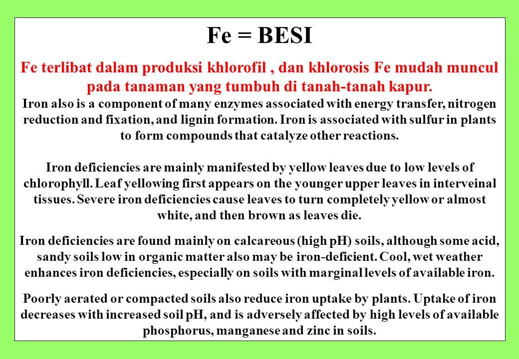 23/9/2008 Fe = BESI. Fe terlibat dalam produksi khlorofil , dan khlorosis Fe mudah muncul pada tanaman yang tumbuh di tanah-tanah kapur.