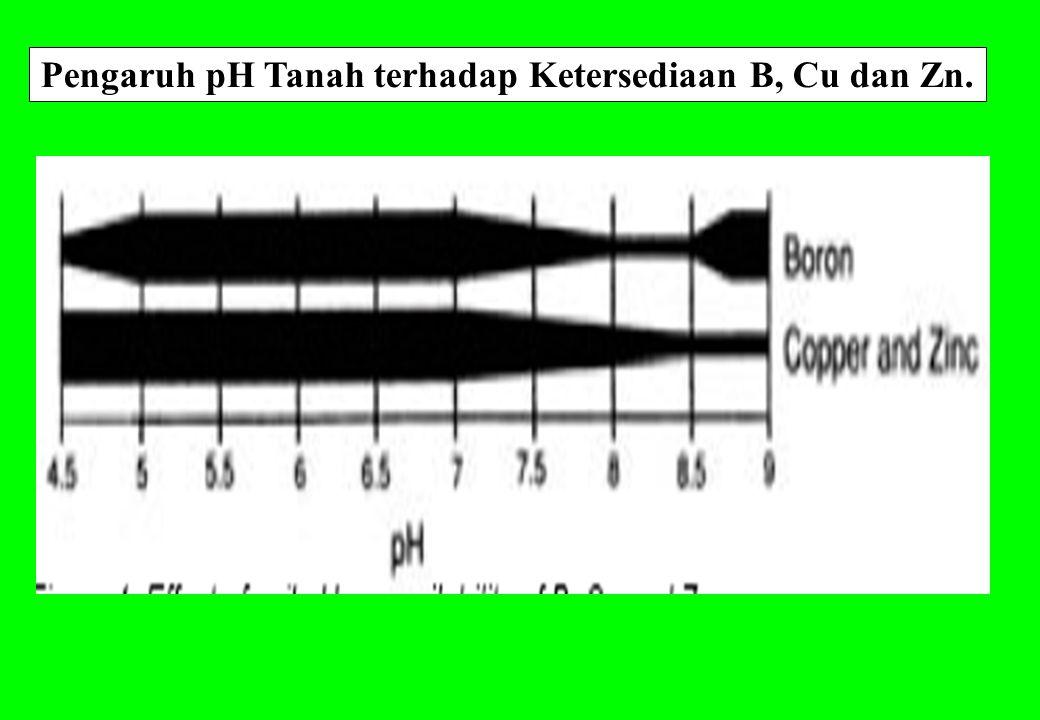 Pengaruh pH Tanah terhadap Ketersediaan B, Cu dan Zn.