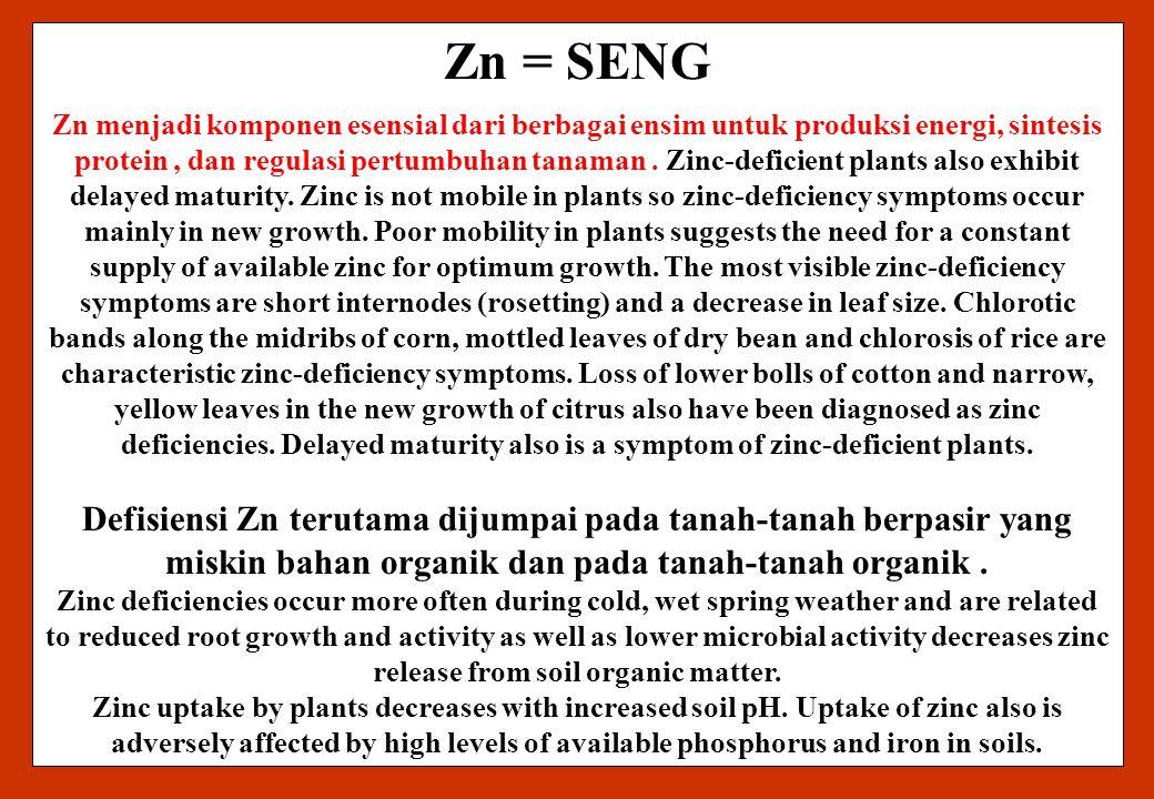 23/9/2008 Zn = SENG.