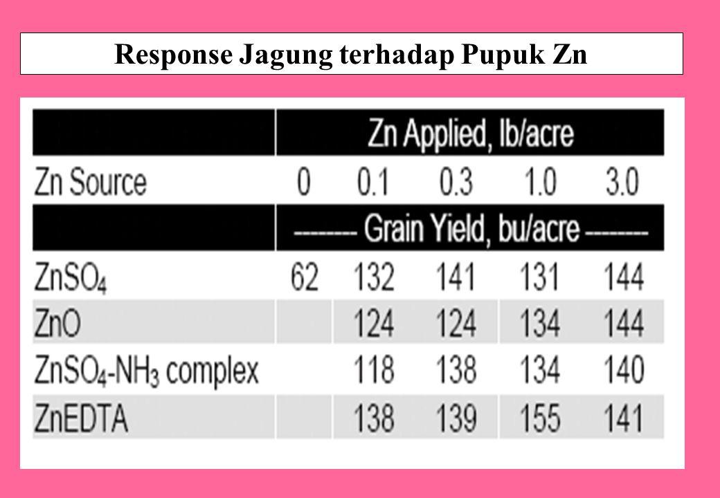 Response Jagung terhadap Pupuk Zn