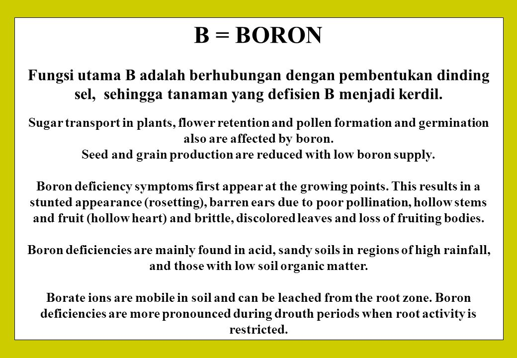 Seed and grain production are reduced with low boron supply.