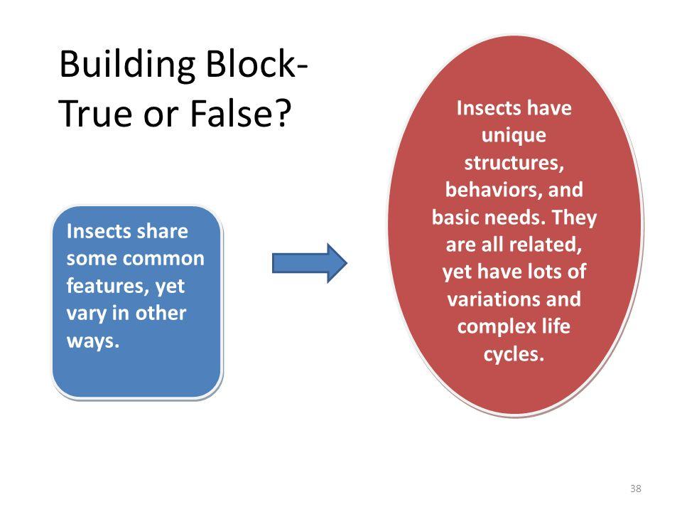 Building Block- True or False
