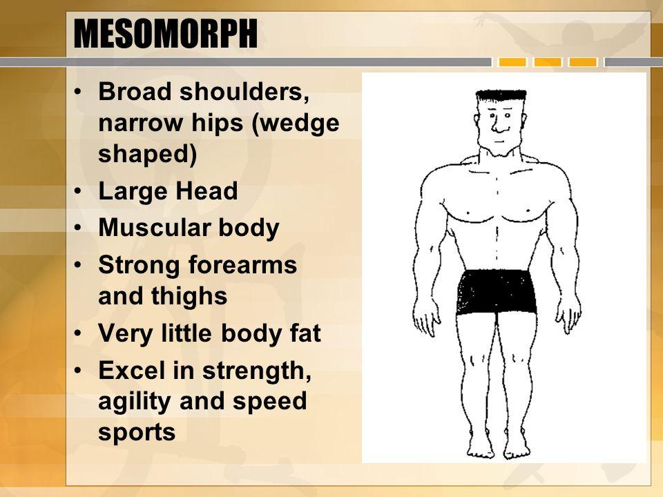 MESOMORPH Broad shoulders, narrow hips (wedge shaped) Large Head