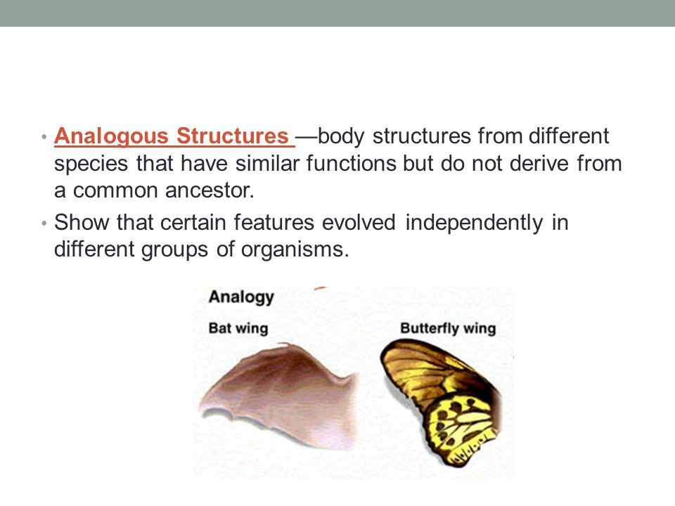 Analogous Structures —body structures from different species that have similar functions but do not derive from a common ancestor.