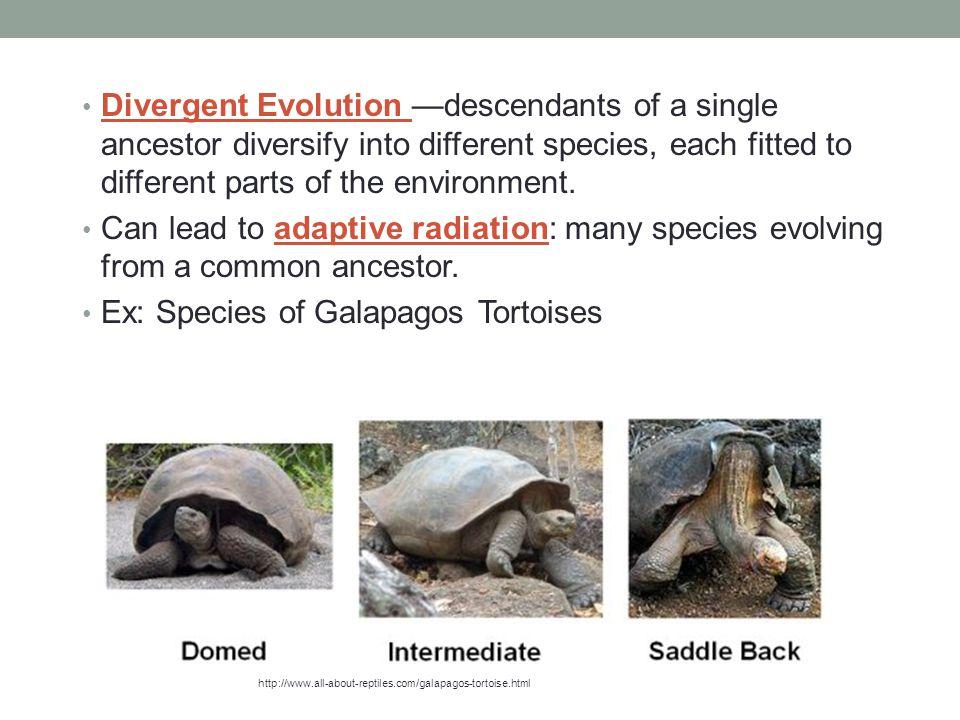 Ex: Species of Galapagos Tortoises