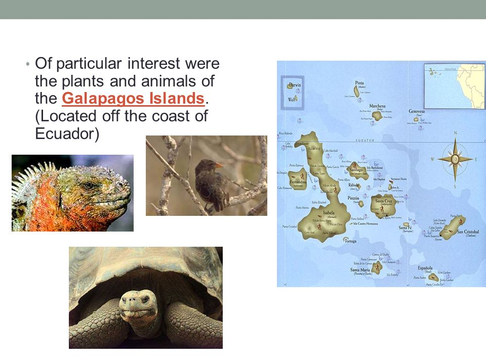 Of particular interest were the plants and animals of the Galapagos Islands.