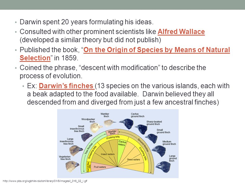 Darwin spent 20 years formulating his ideas.