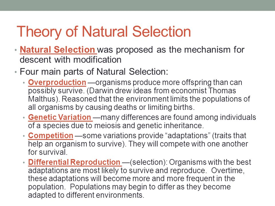 Theory Of Natural Selection Was Proposed By