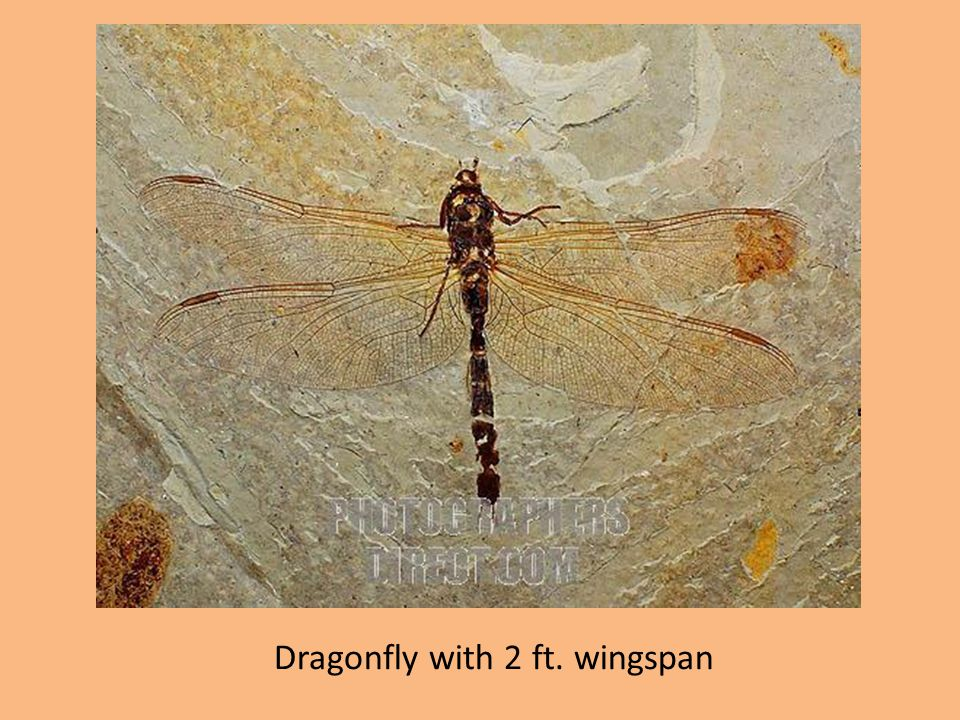 Dragonfly with 2 ft. wingspan