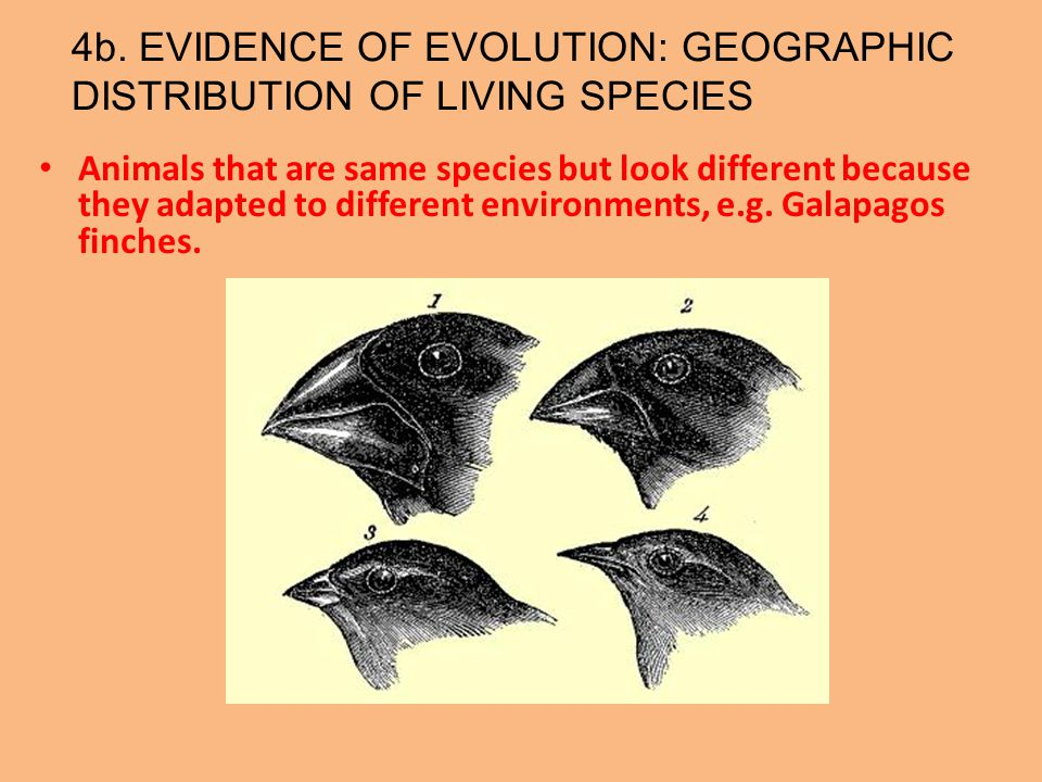 4b. EVIDENCE OF EVOLUTION: GEOGRAPHIC DISTRIBUTION OF LIVING SPECIES