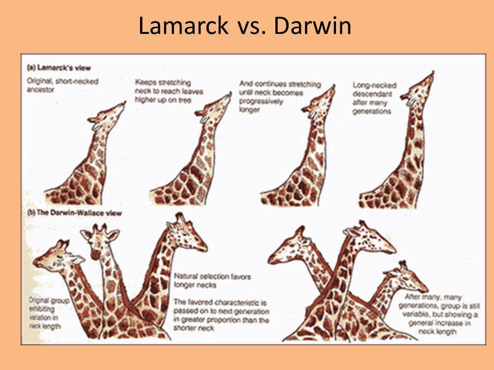 Lamarck Theory Of Natural Selection
