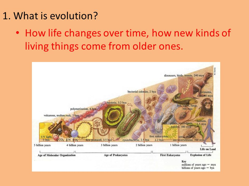 1. What is evolution.