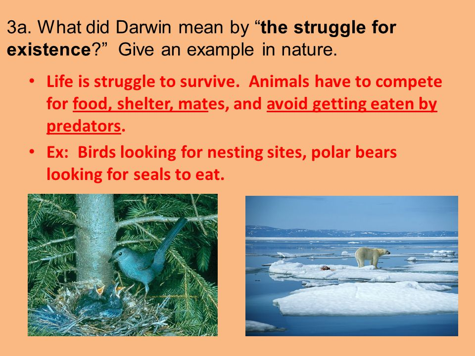 3a. What did Darwin mean by the struggle for existence