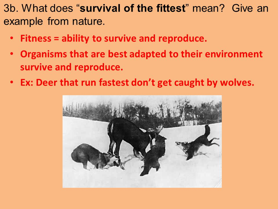 3b. What does survival of the fittest mean