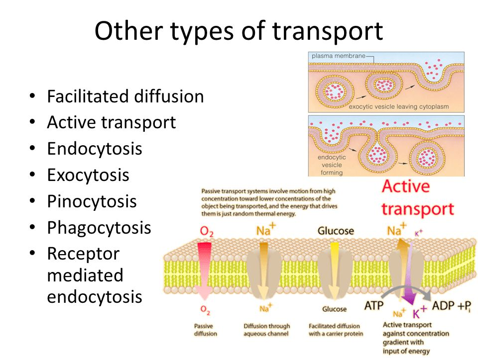 Other types of transport