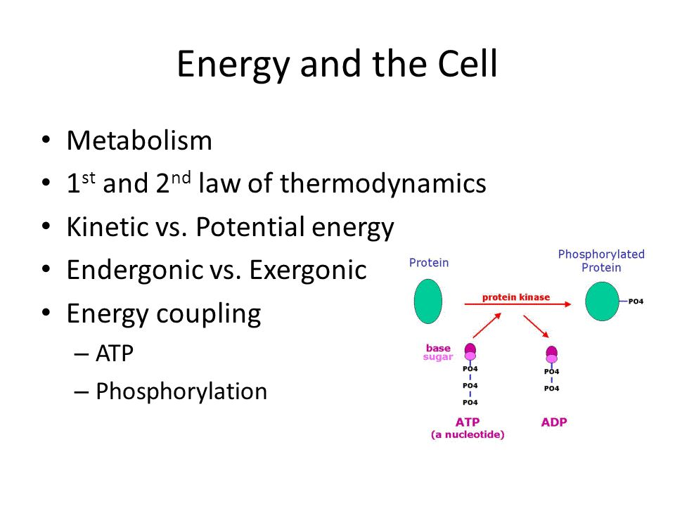 Energy and the Cell Metabolism 1st and 2nd law of thermodynamics