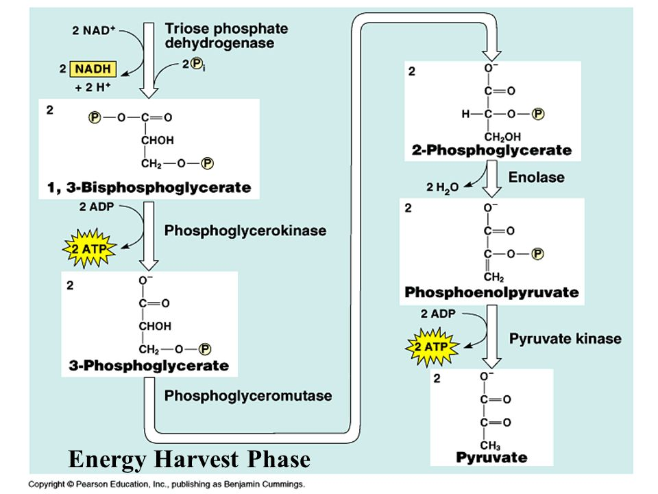 Energy Harvest Phase