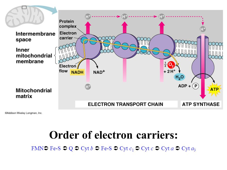 Order of electron carriers: