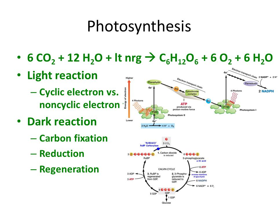 Photosynthesis 6 CO2 + 12 H2O + lt nrg  C6H12O6 + 6 O2 + 6 H2O