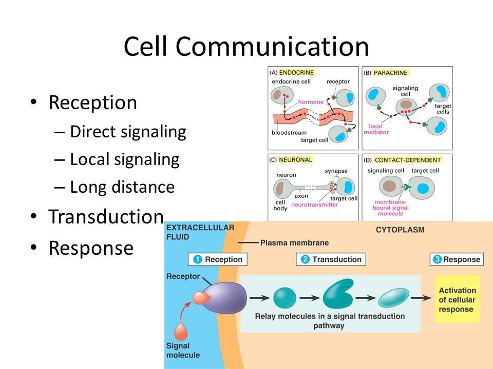 Cell Communication Reception Transduction Response Direct signaling