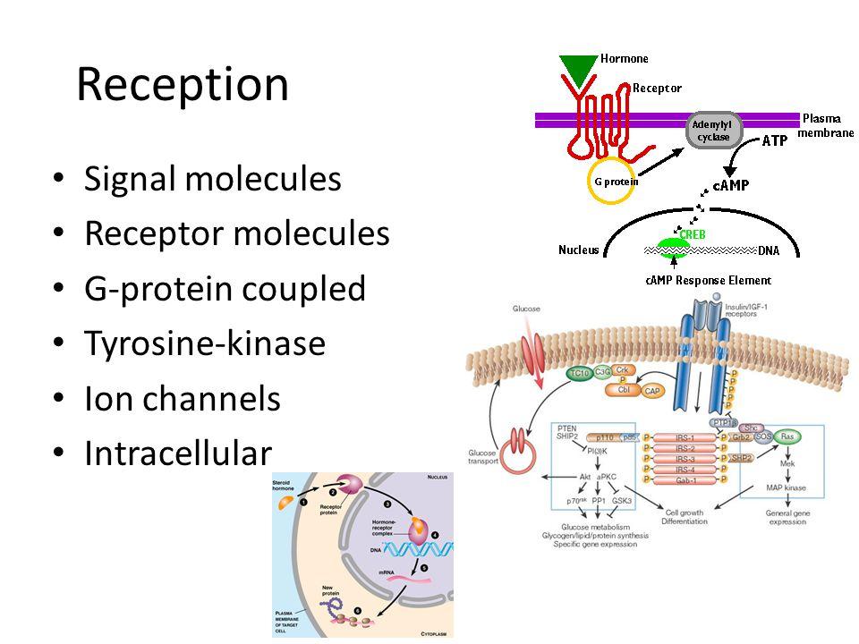 Reception Signal molecules Receptor molecules G-protein coupled