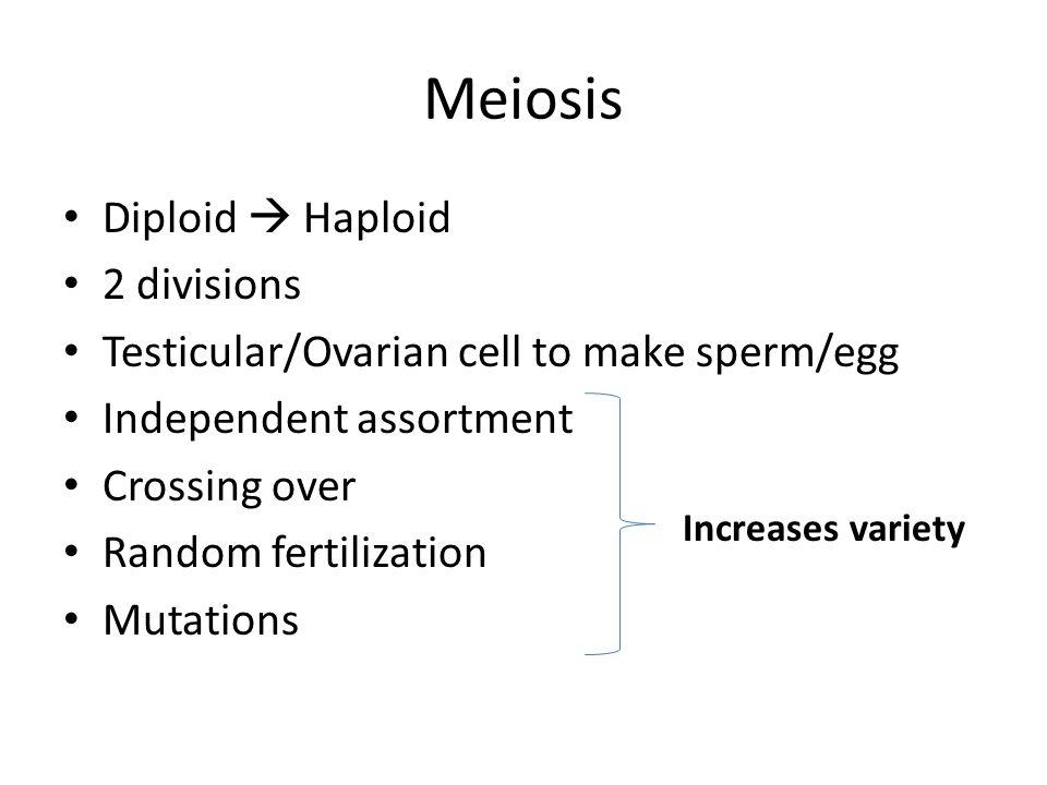 Meiosis Diploid  Haploid 2 divisions