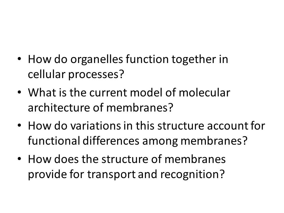 How do organelles function together in cellular processes