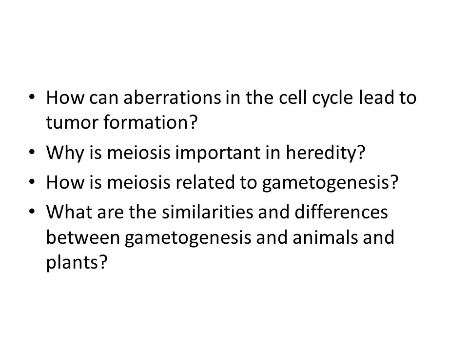 How can aberrations in the cell cycle lead to tumor formation