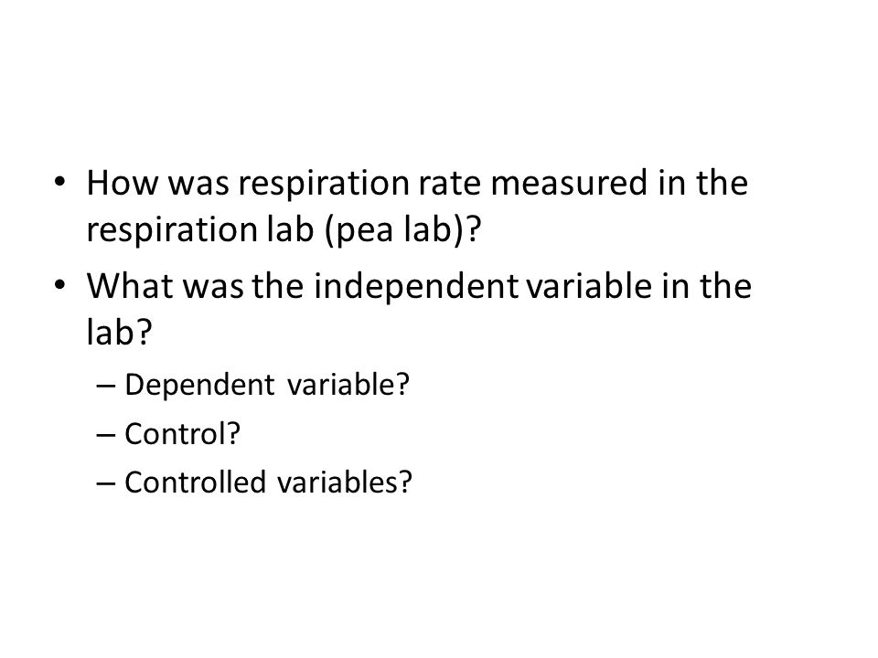 How was respiration rate measured in the respiration lab (pea lab)