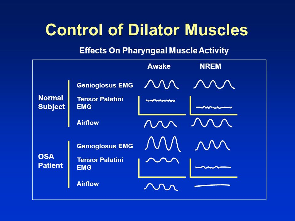 Control of Dilator Muscles