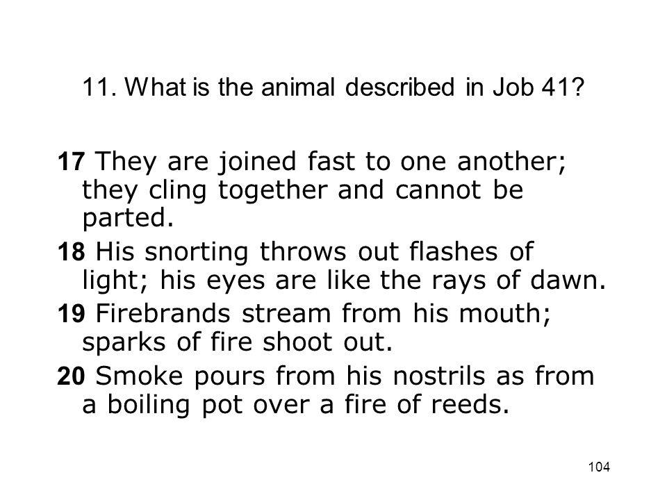 11. What is the animal described in Job 41