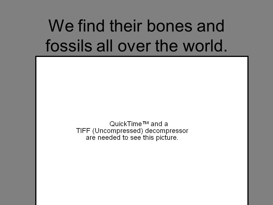 We find their bones and fossils all over the world.