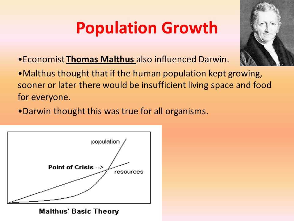 Population Growth Economist Thomas Malthus also influenced Darwin.