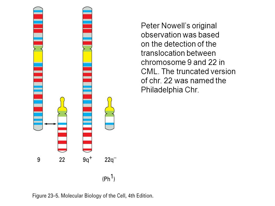 Peter Nowell's original observation was based on the detection of the translocation between chromosome 9 and 22 in CML.