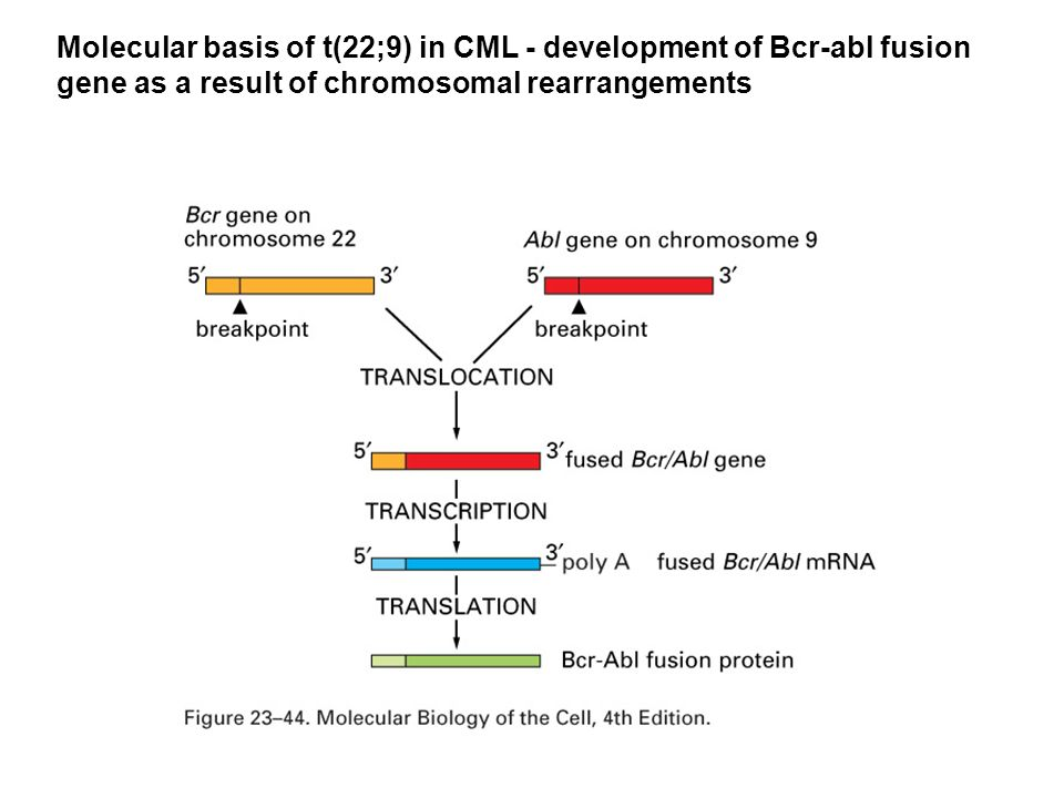 Molecular basis of t(22;9) in CML - development of Bcr-abl fusion gene as a result of chromosomal rearrangements