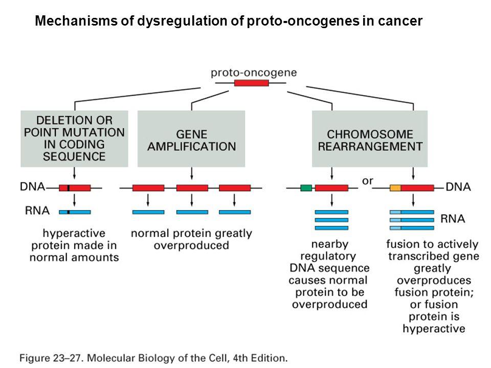 Mechanisms of dysregulation of proto-oncogenes in cancer