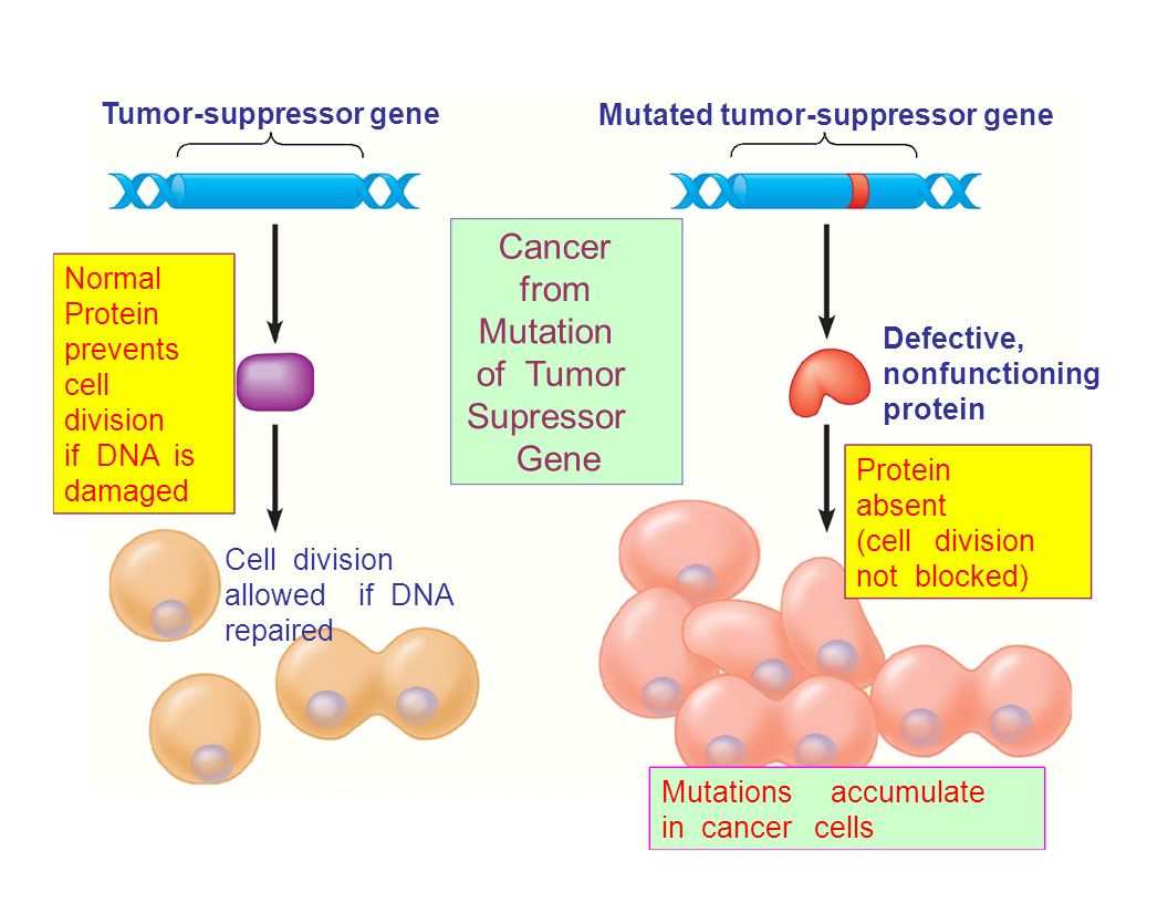 Cancer from Mutation of Tumor Supressor Gene Tumor-suppressor gene