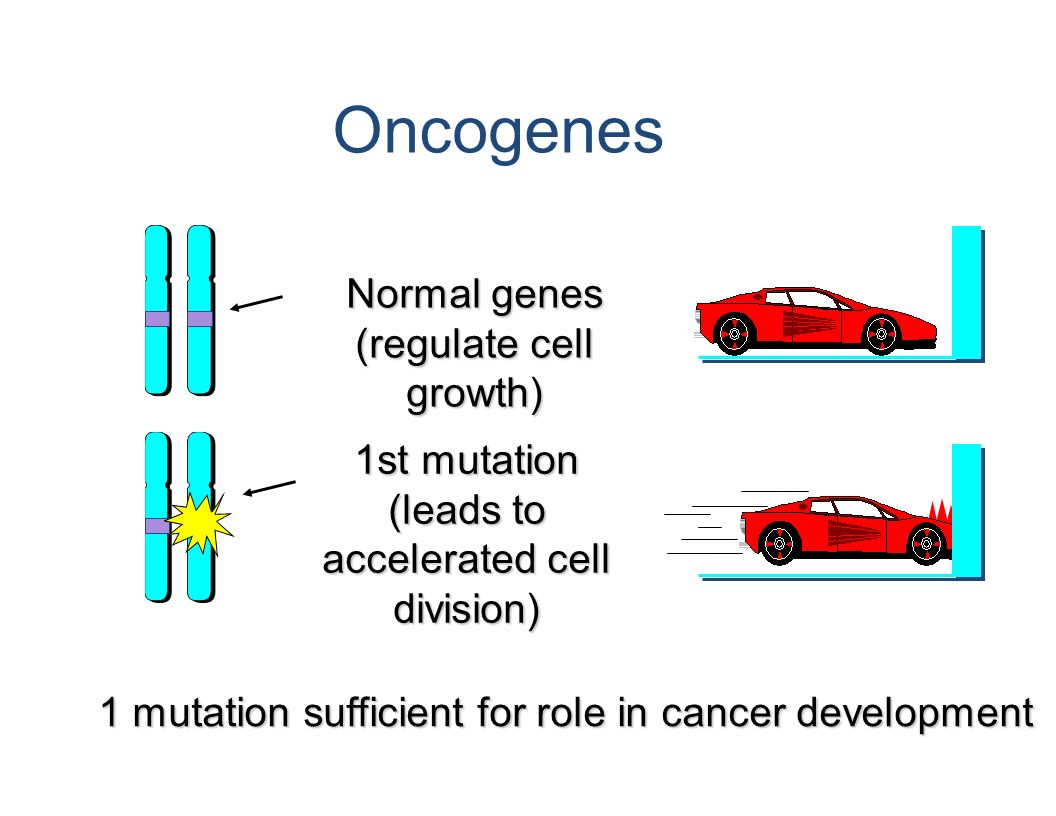 Oncogenes Normal genes (regulate cell growth) 1st mutation