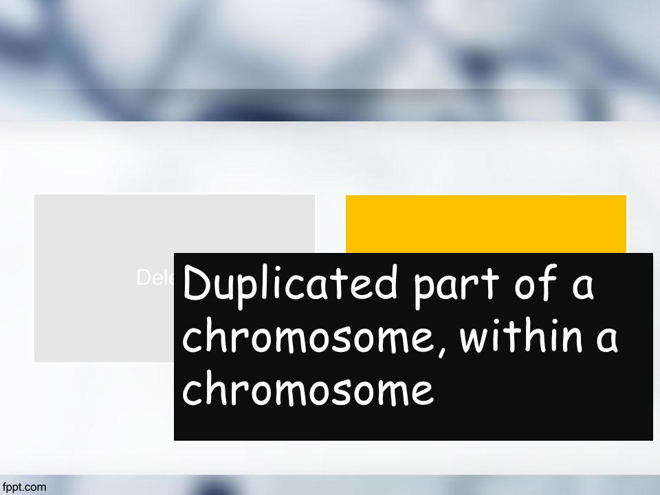 Duplicated part of a chromosome, within a chromosome