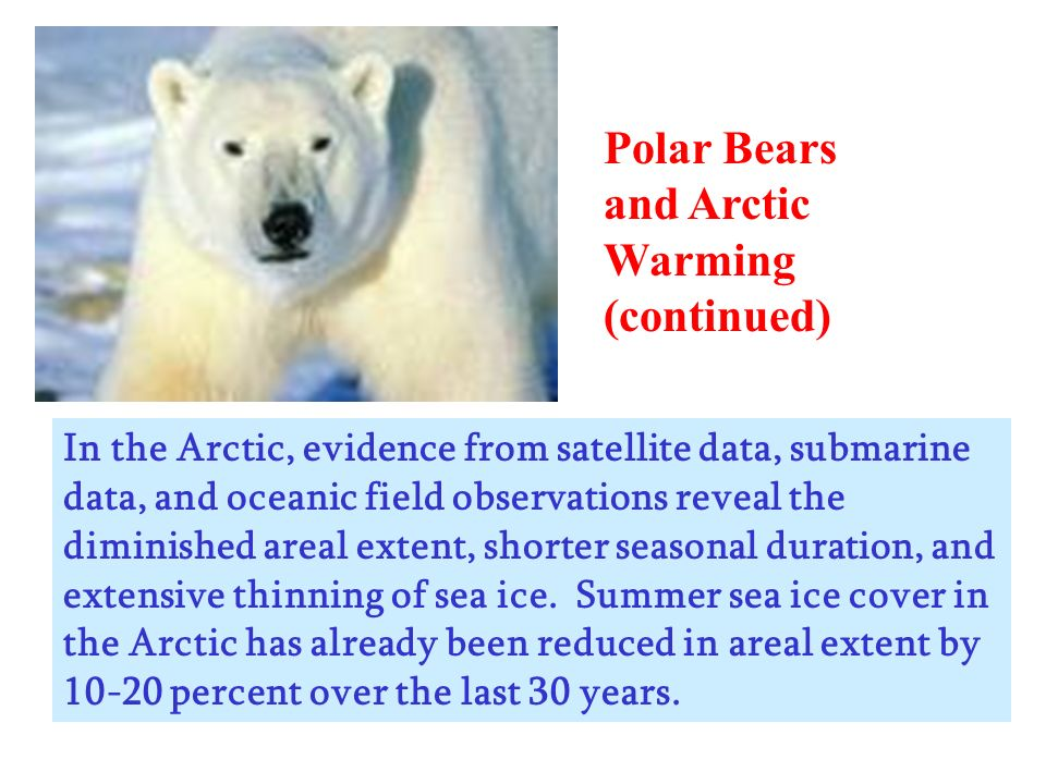 Polar Bears and Arctic Warming (continued)