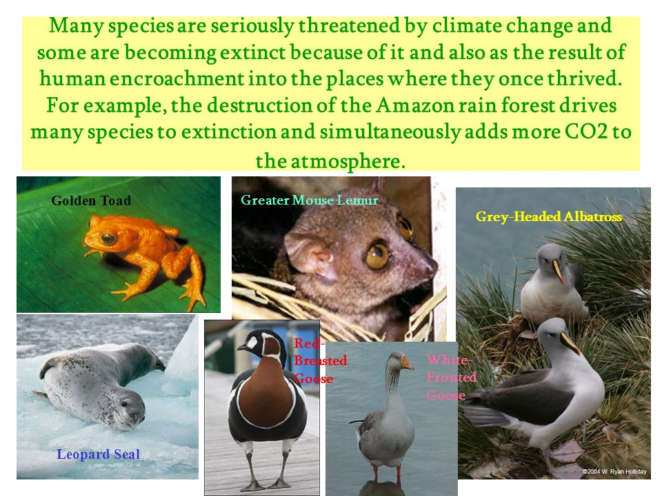 Many species are seriously threatened by climate change and some are becoming extinct because of it and also as the result of human encroachment into the places where they once thrived. For example, the destruction of the Amazon rain forest drives many species to extinction and simultaneously adds more CO2 to the atmosphere.