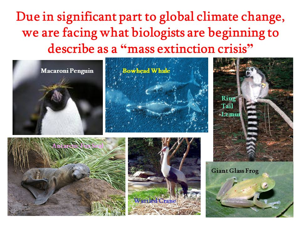 Due in significant part to global climate change, we are facing what biologists are beginning to describe as a mass extinction crisis