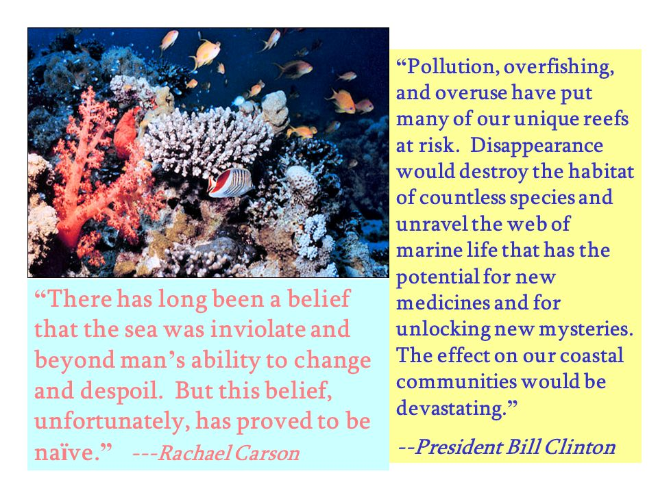 Pollution, overfishing, and overuse have put many of our unique reefs at risk. Disappearance would destroy the habitat of countless species and unravel the web of marine life that has the potential for new medicines and for unlocking new mysteries. The effect on our coastal communities would be devastating.