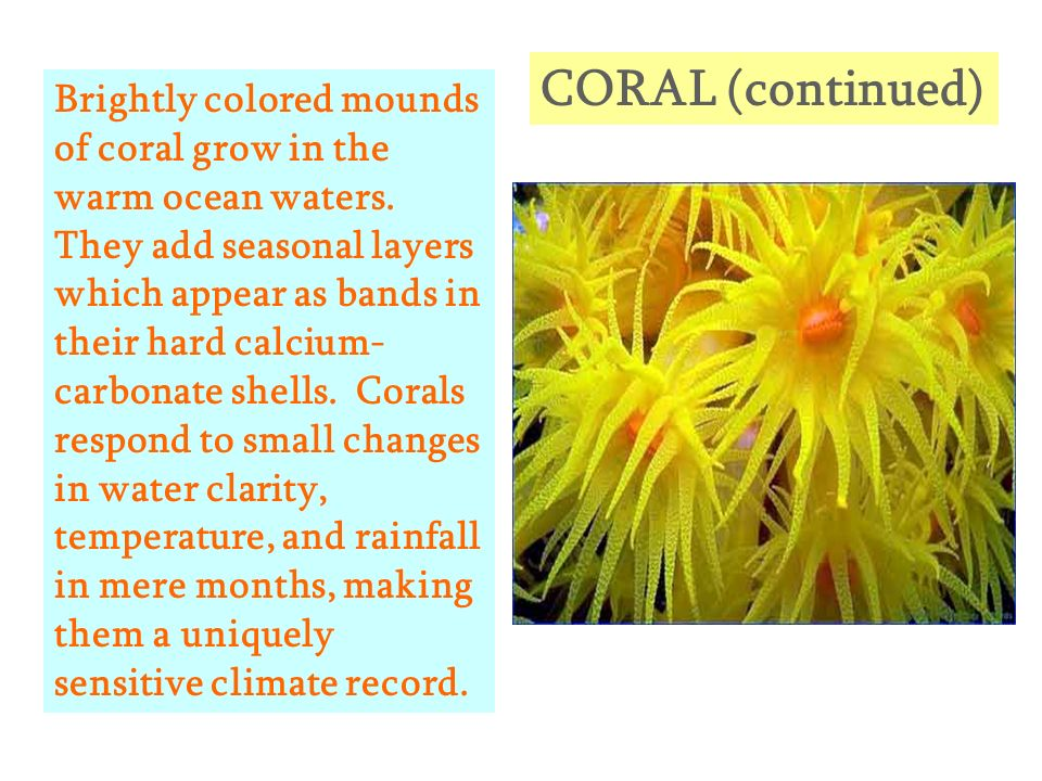 CORAL (continued)
