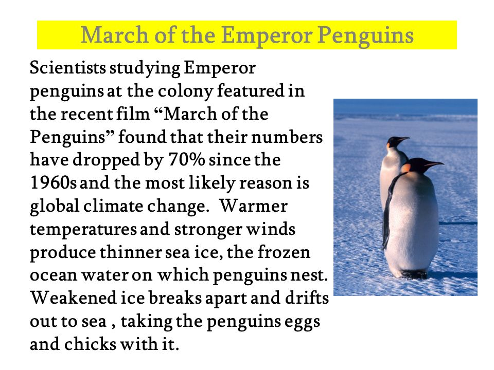 March of the Emperor Penguins