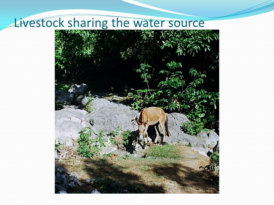 Livestock sharing the water source